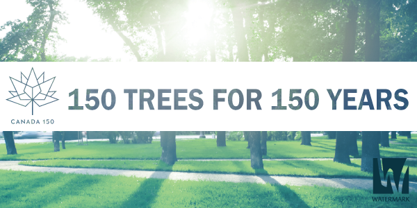 150 Trees Banner.png
